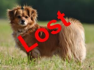 cata lost