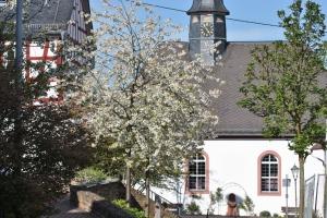 fruehling-2014-neuhof-und-wehen-002_klein